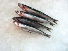 Boquerones. En nuestra pescadería online, puedes comprar boquerones y te los preparamos como quieras