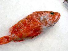 El Cabracho es un pescado sabroso, blanco