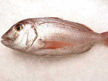 Pargo pescado con anzuelo