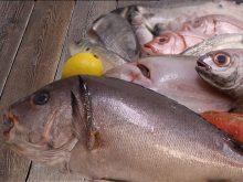 Pescados | Compra pescado